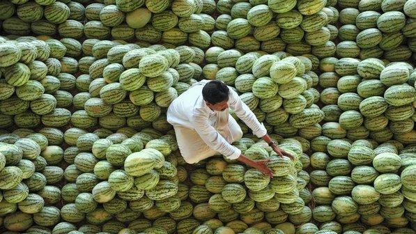 Fazendeiro-melancias-pilhas-india-20120320-size-598