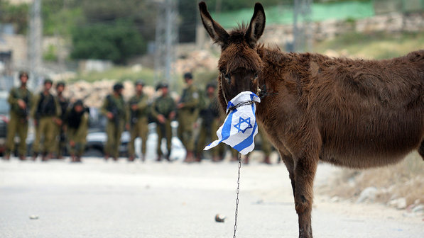 Burro-israel-palestinos-conflito-20120504-size-598